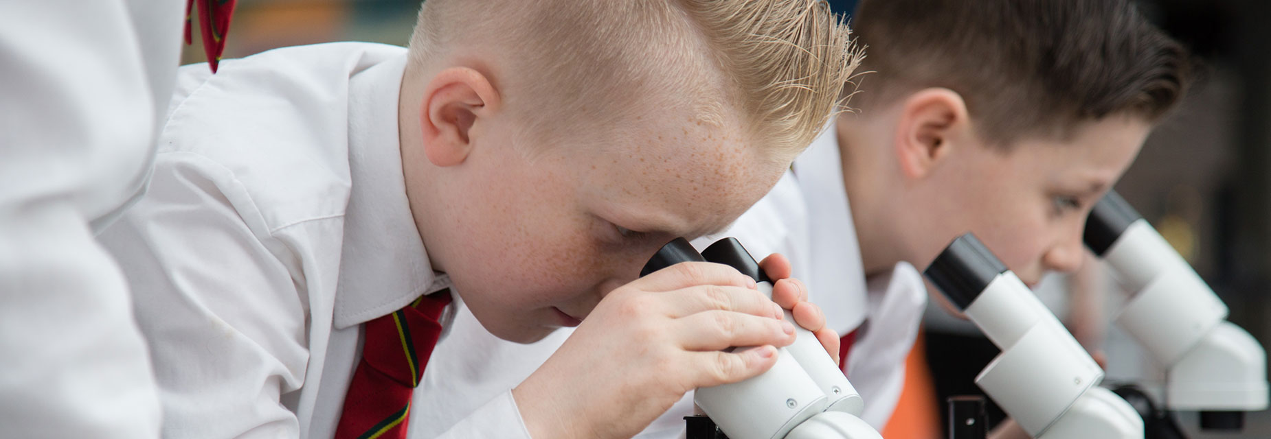 Pupils looking through microscopes at lichen samples