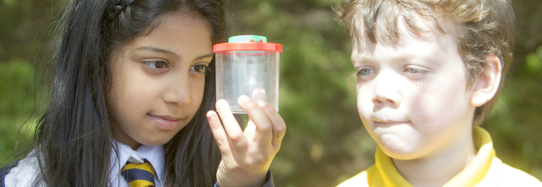 Pupils examine bugs they've collected outdoors as part of an OPAL survey