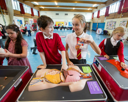 Primary pupils examine a portable exhibit showing the vital organs in a human torso