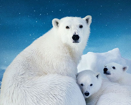 To The Arctic 3D Imax Film Image of Polar Bears