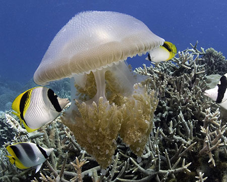 Under The Sea 3D Image of tropical fish and a jellyfish