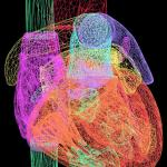 A computer-generated visualisation of a human heart